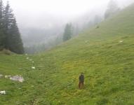 per offrirci meravigliosi cammini verso le cime sotto il sole e dentro le nubi