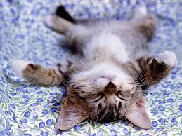 Micio - rilassamento